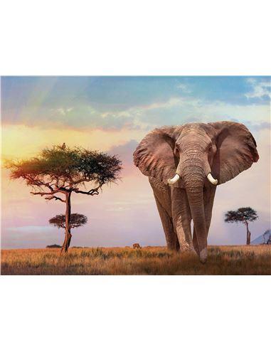 Pompon Colors Diset - 09568967